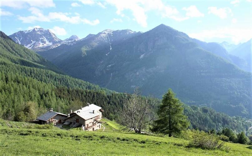 Montagna affitto isolato nel bosco