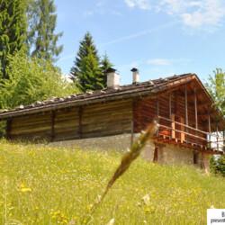 Trentino baita affitto Fiera Primiero